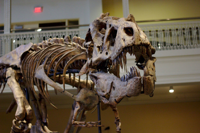 Dinosaurs_in_Their_Time,_Carnegie_Museum_of_Natural_History,_2013-12-14_03