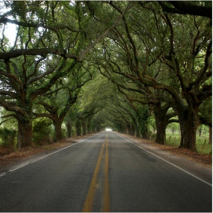 louisiana scenic byways map 9 Amazing Scenic Drives From Across Louisiana louisiana scenic byways map