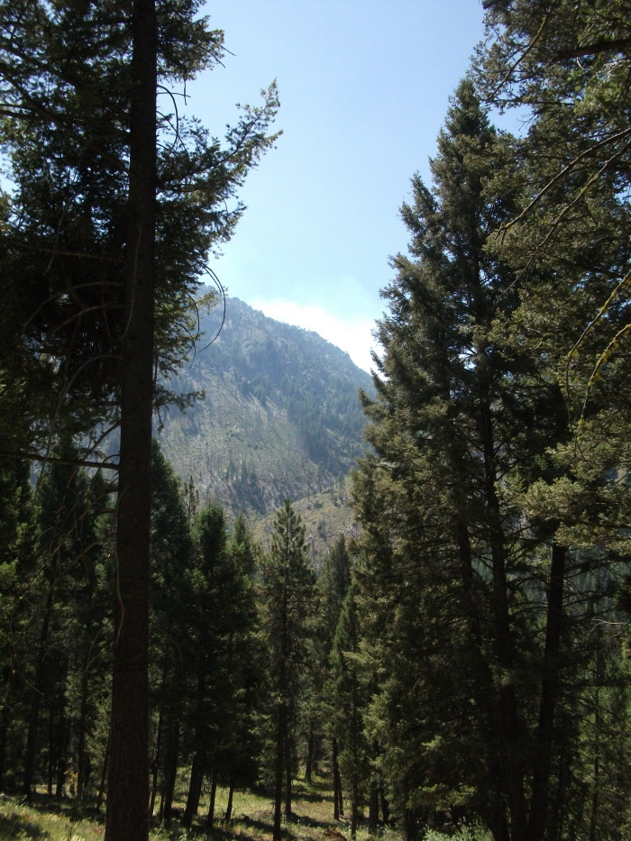 Wasatch-Cache National Forest in Northern Utah /& South East Idaho 1,607,177 acre