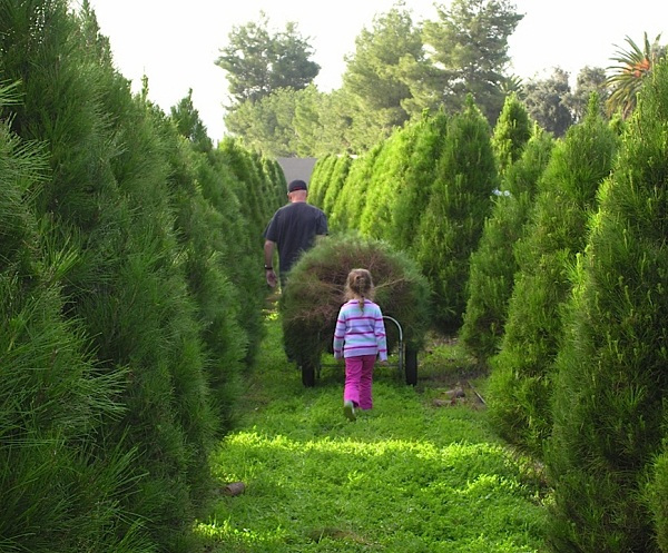 Cut Your Own Christmas Tree Near Me.10 Enchanting Holiday Activities To Experience In Southern