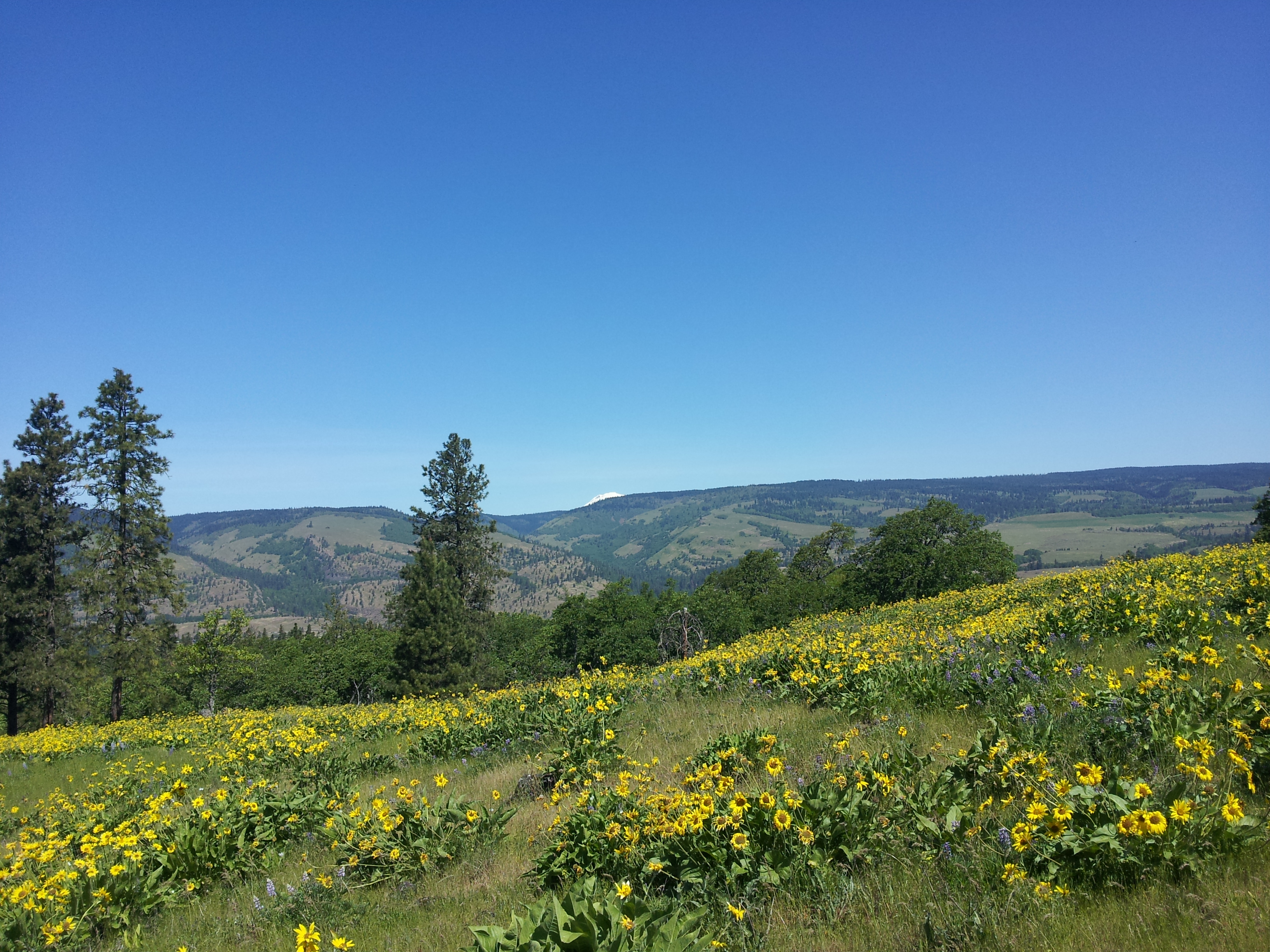 5 Best Wildflower Hikes In and Around Portland This Spring