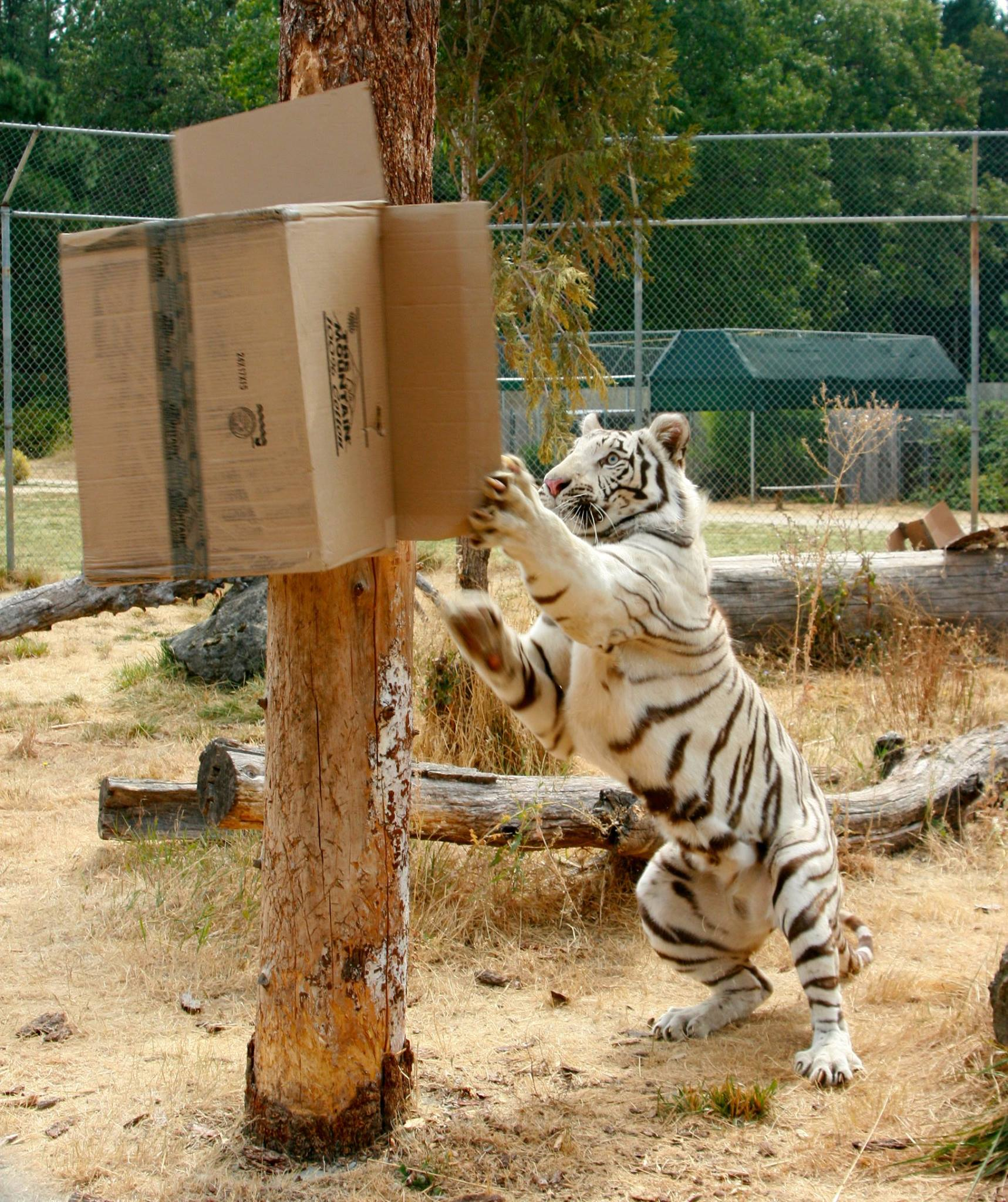 The One Of A Kind Park In Oregon Where You Can See Wild Cats Up Close