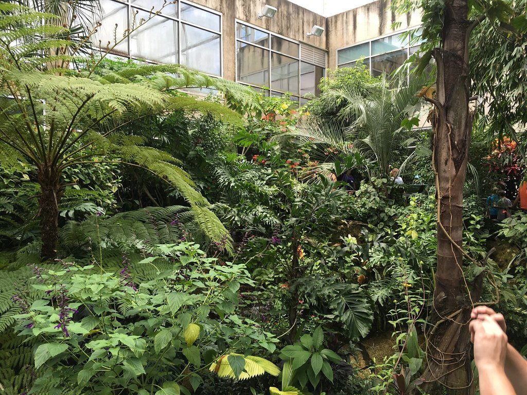 Plan A Day Trip To Butterfly Rainforest At The Florida Museum Of