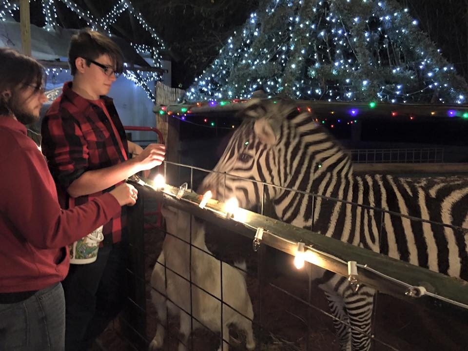Hollywild Zoo Christmas Lights 2020 Hollywild Animal Preserve Has Best Christmas Safari In South Carolina