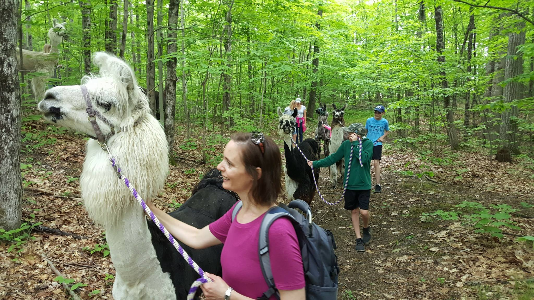 Go Hiking With Llamas In New York For An Adventure Unlike Any Other