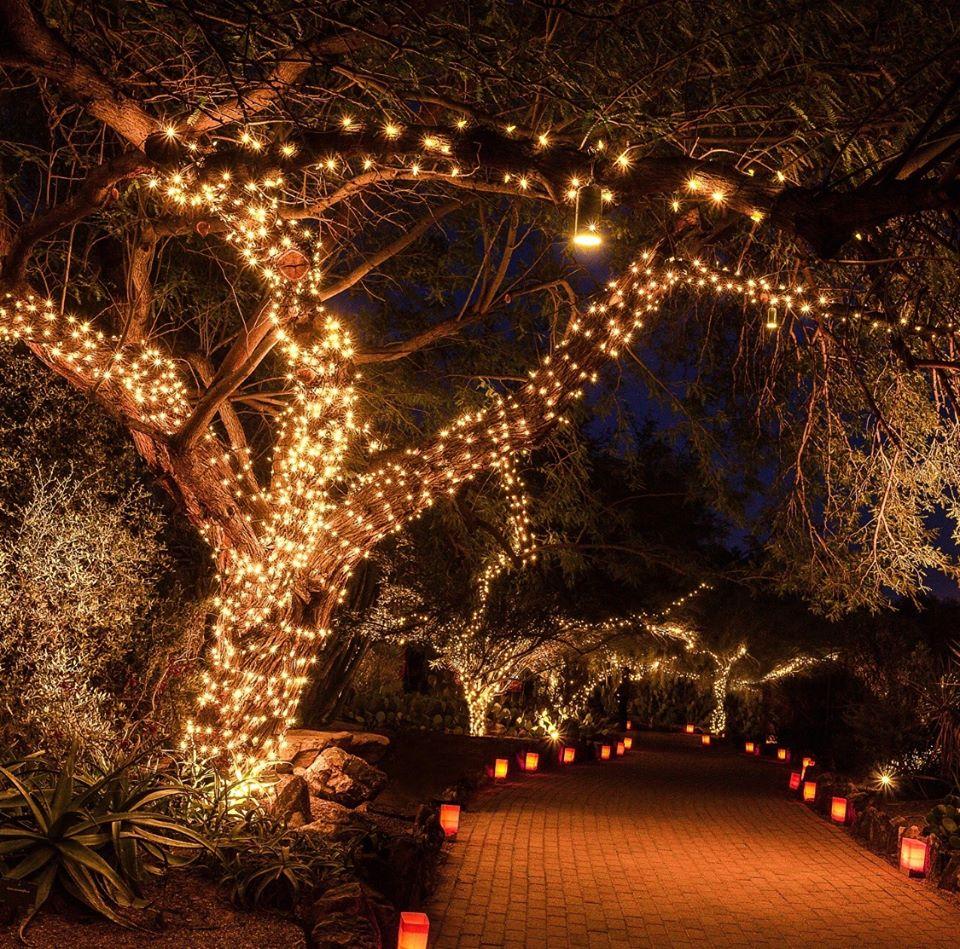 Visit The Christmas Lights Display At Desert Botanical Garden In