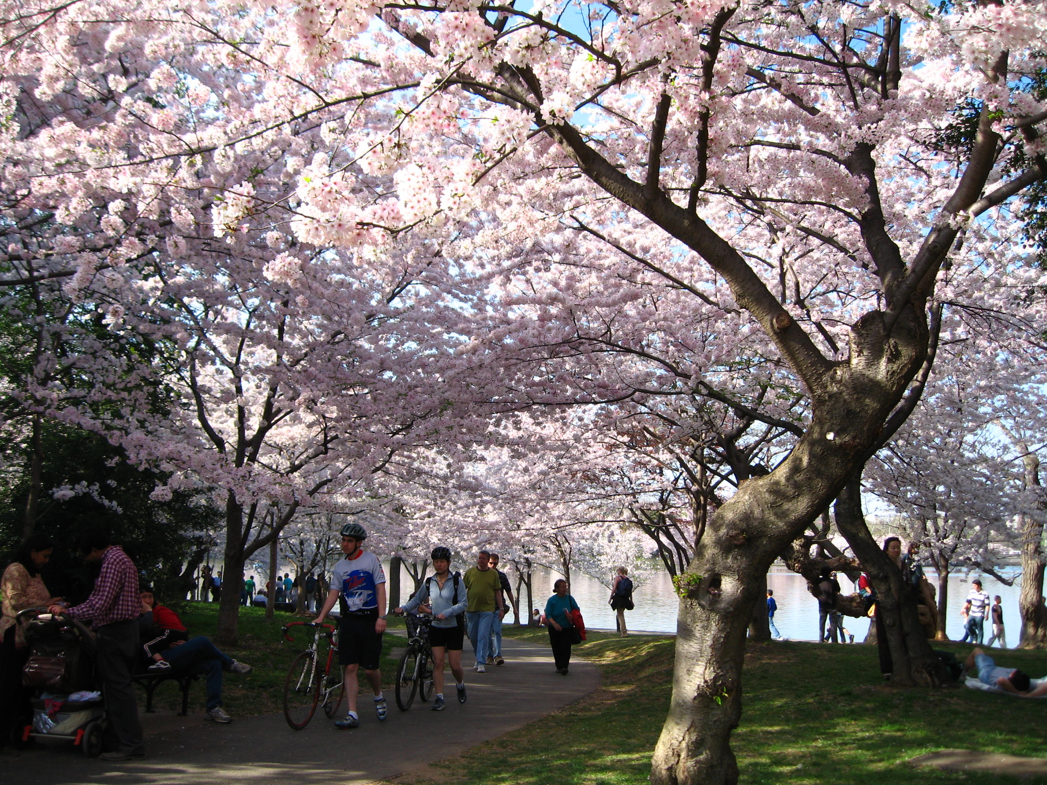 The Georgia Cherry Blossom Festival Will Have Over 300,000 Trees In Bloom This Spring