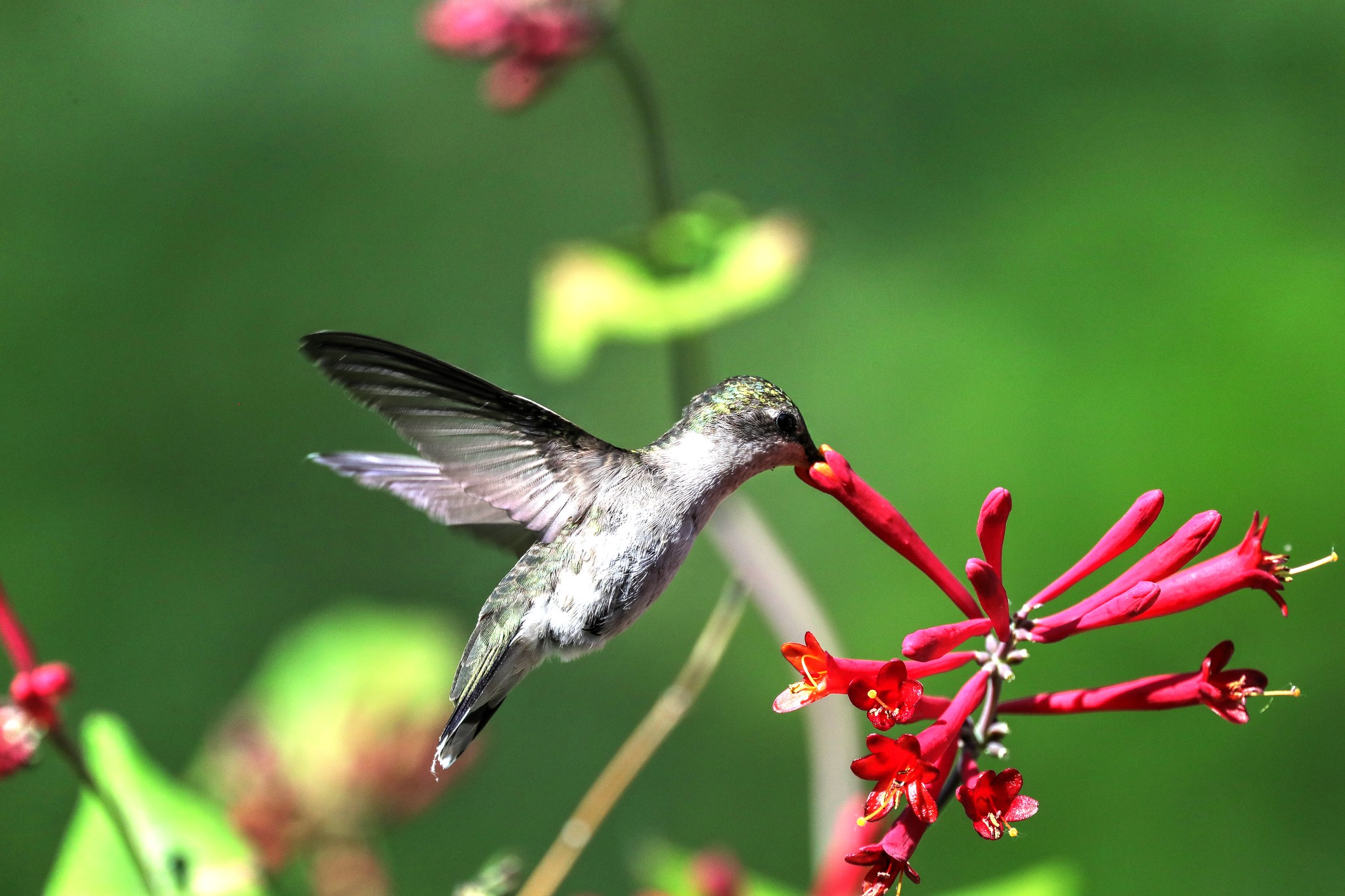 Keep Your Eyes Peeled, Thousands Of Hummingbirds Are Headed Right For Connecticut During Their Migration This Spring