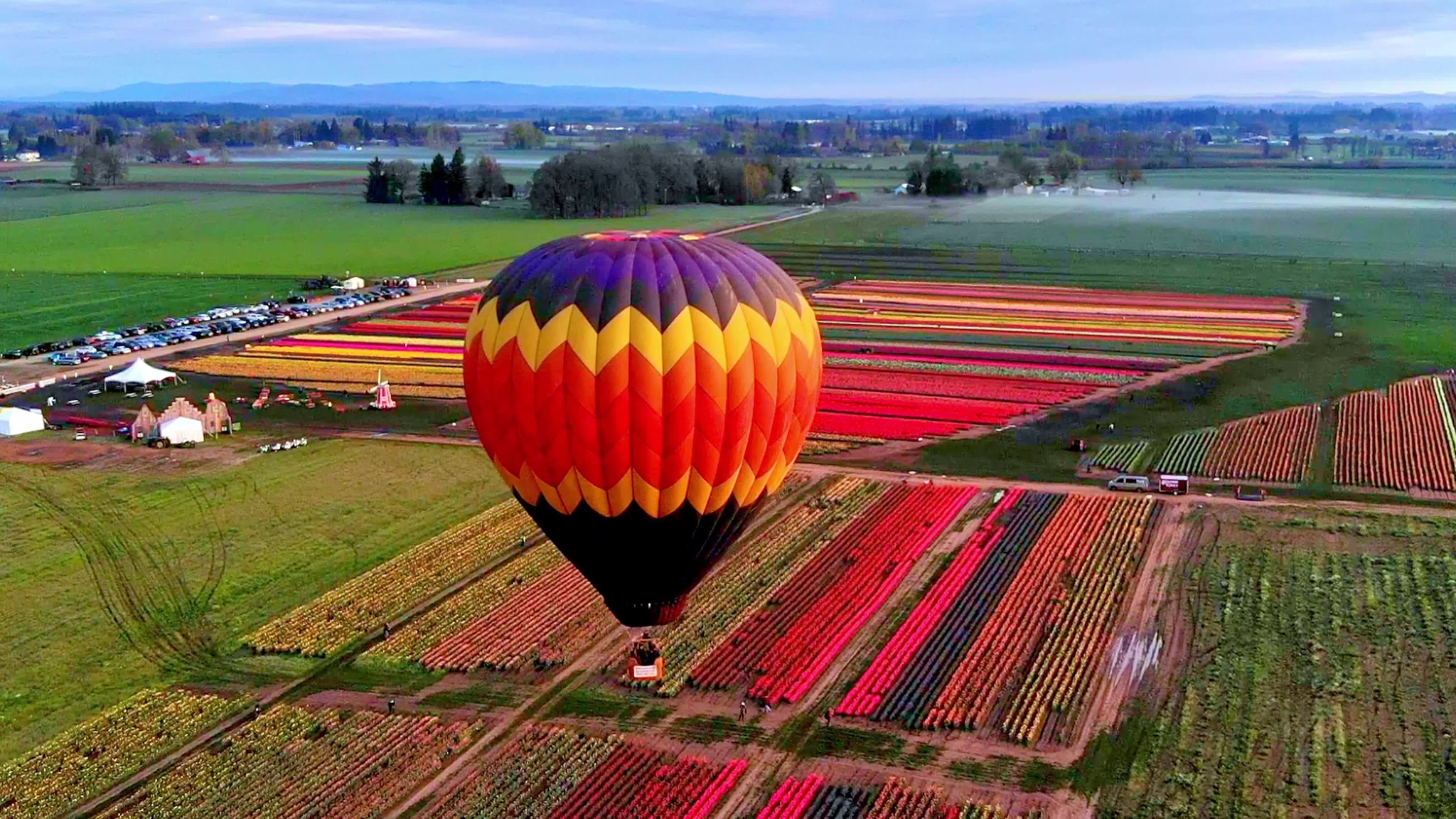 Explore 40 Acres Of Vibrant Blooms At The Wooden Shoe Tulip Festival In Oregon