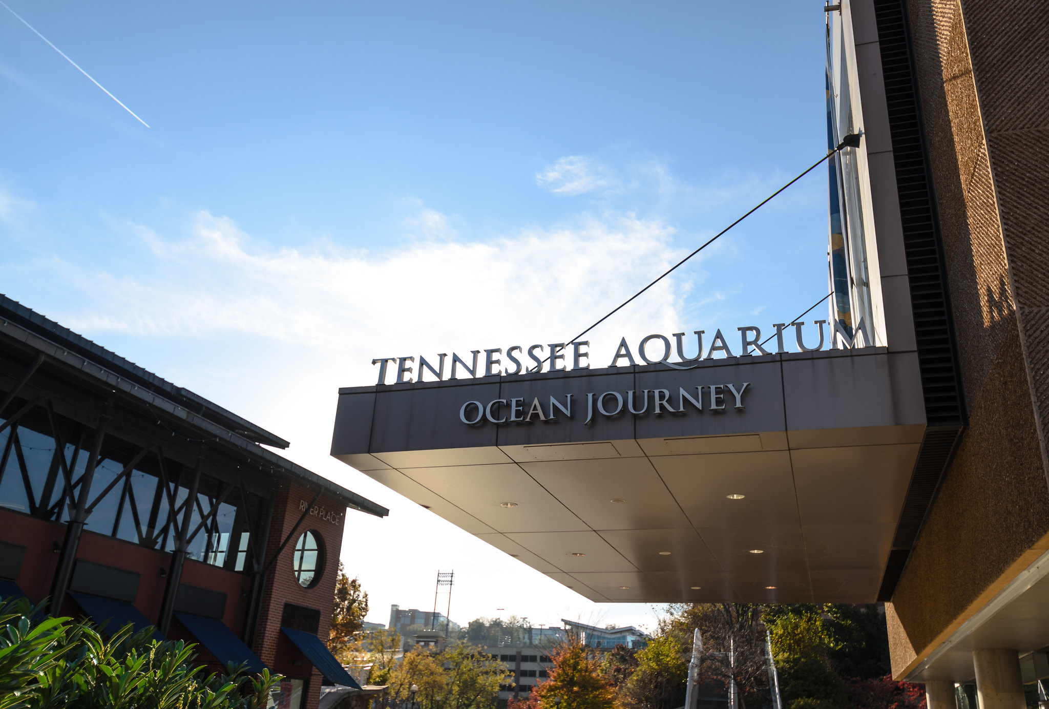Visit The Tennessee Aquarium Without Leaving Your House With Its Habitat Webcams