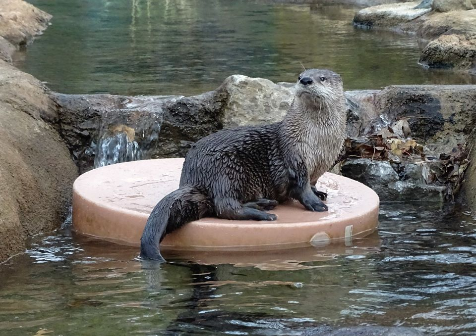The Detroit Zoo In Michigan Is Offering Free Live Streams Of Penguins, Otters, And More