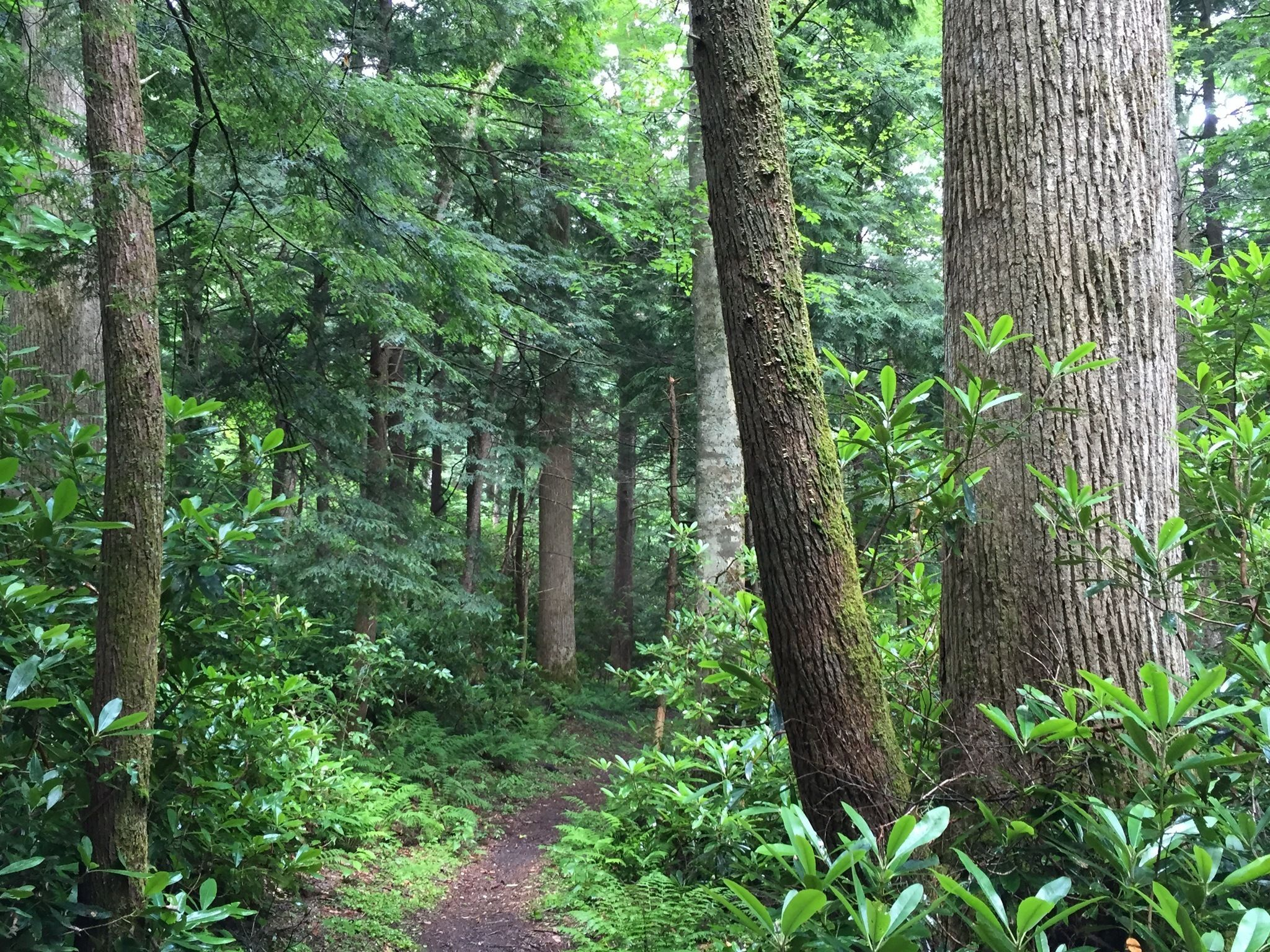 This Remote Hike Through The Great Smoky Mountains In Tennessee Winds Through Miles Of Remote, Old Growth Forest