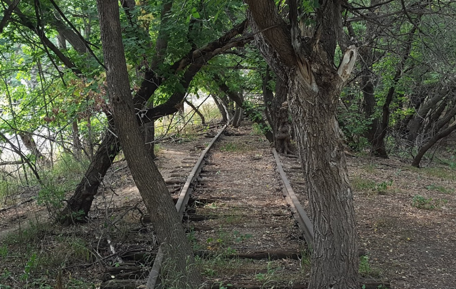 Walk Alongside A River, Abandoned Railroad Track, And More On The Bison Plant Trail In North Dakota