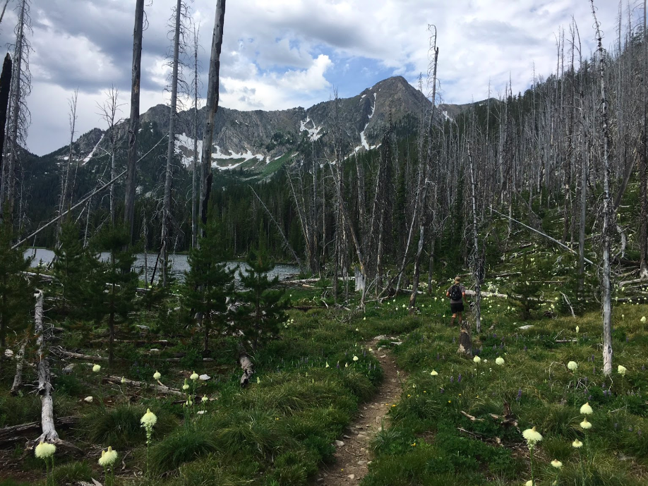 Retrace The Footsteps Of Lewis Clark On The Alice Creek Trail In Montana