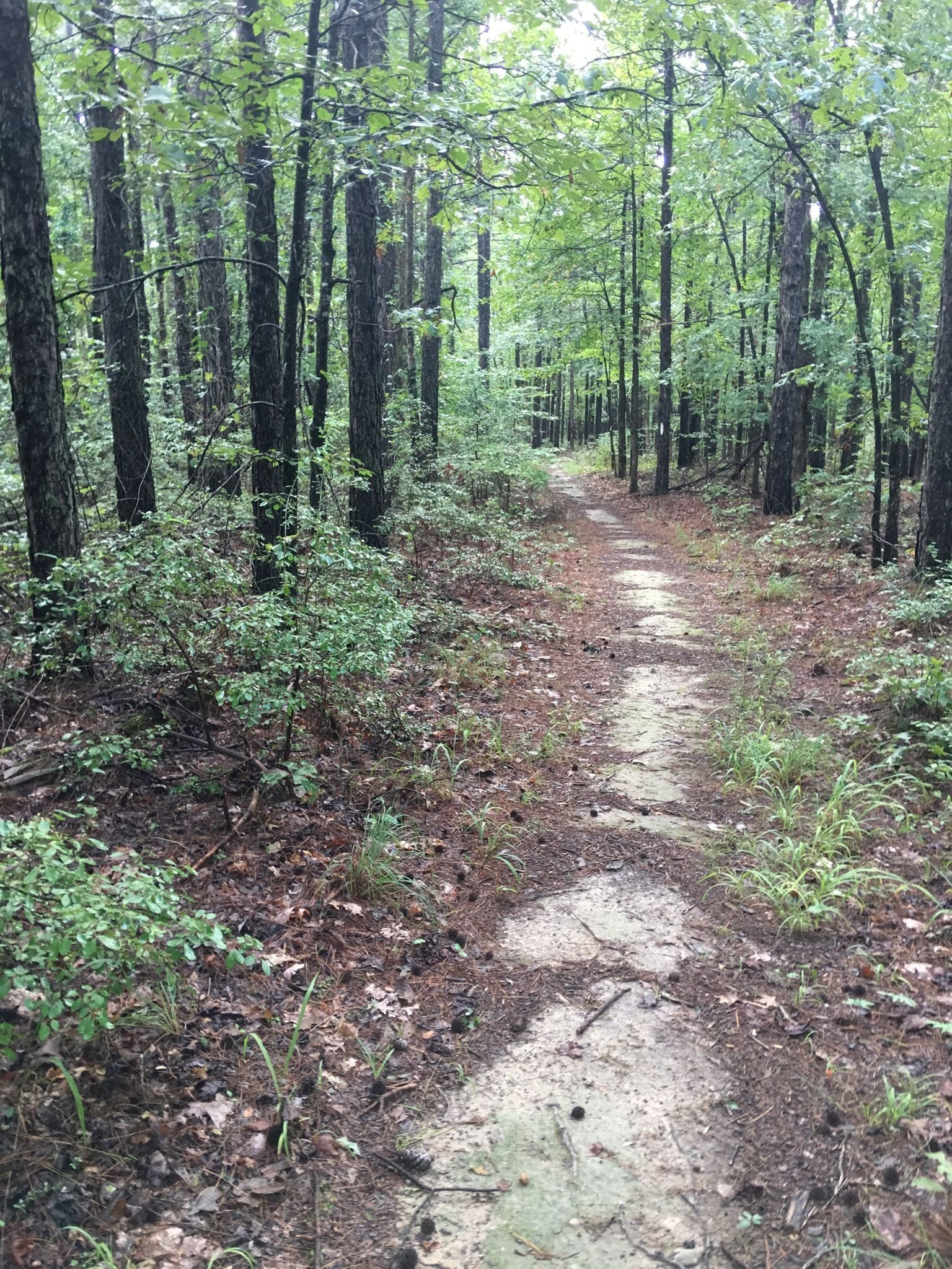 Shake Up Your Routine With A Hike Along Earthquake Ridge In Arkansas
