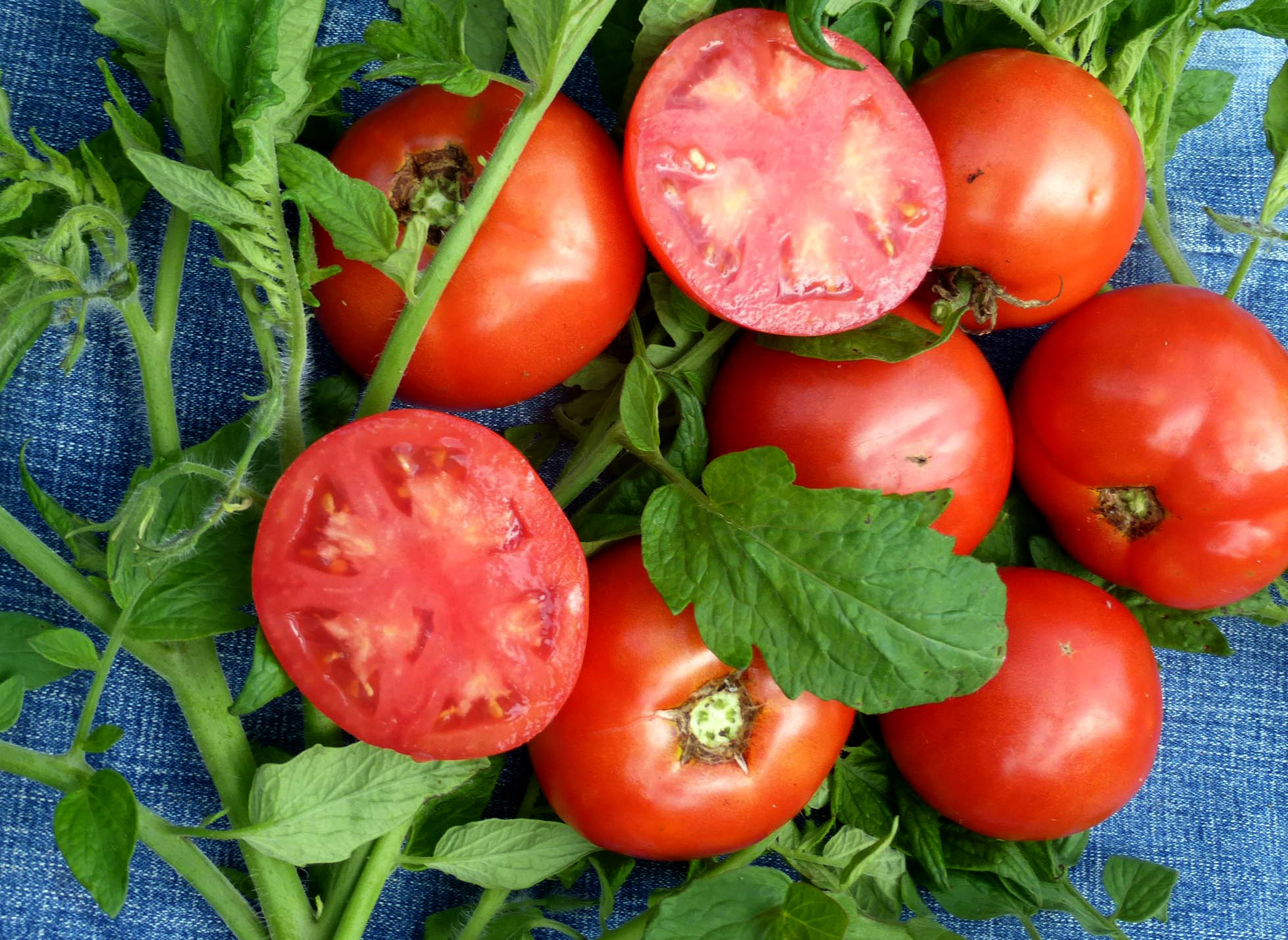 Few People Know That West Virginia Is The Birthplace Of The First Blight-Resistant Tomato And Other Popular Produce Lines