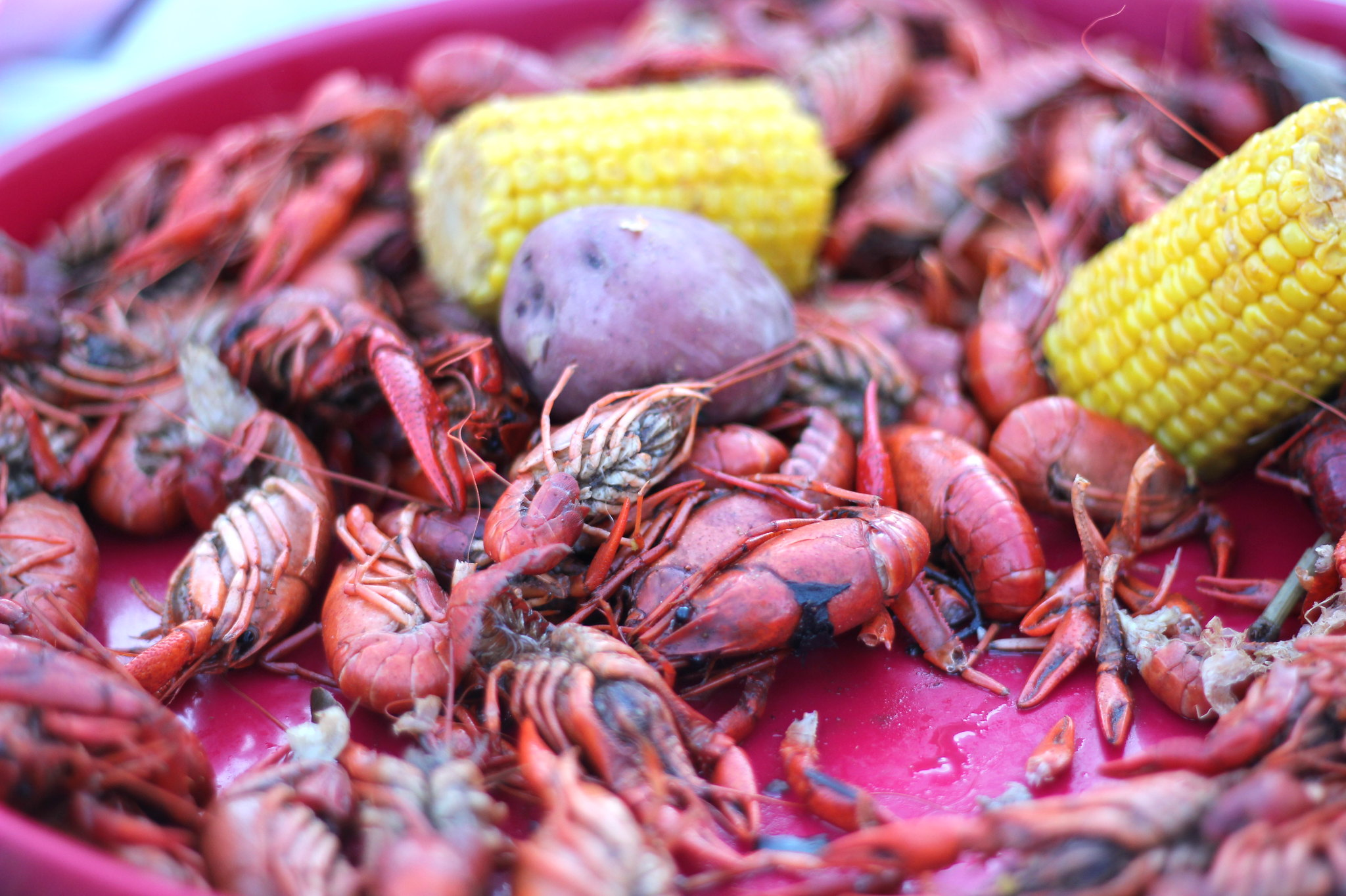 7 Things Louisianians Will Always Be Stubborn About