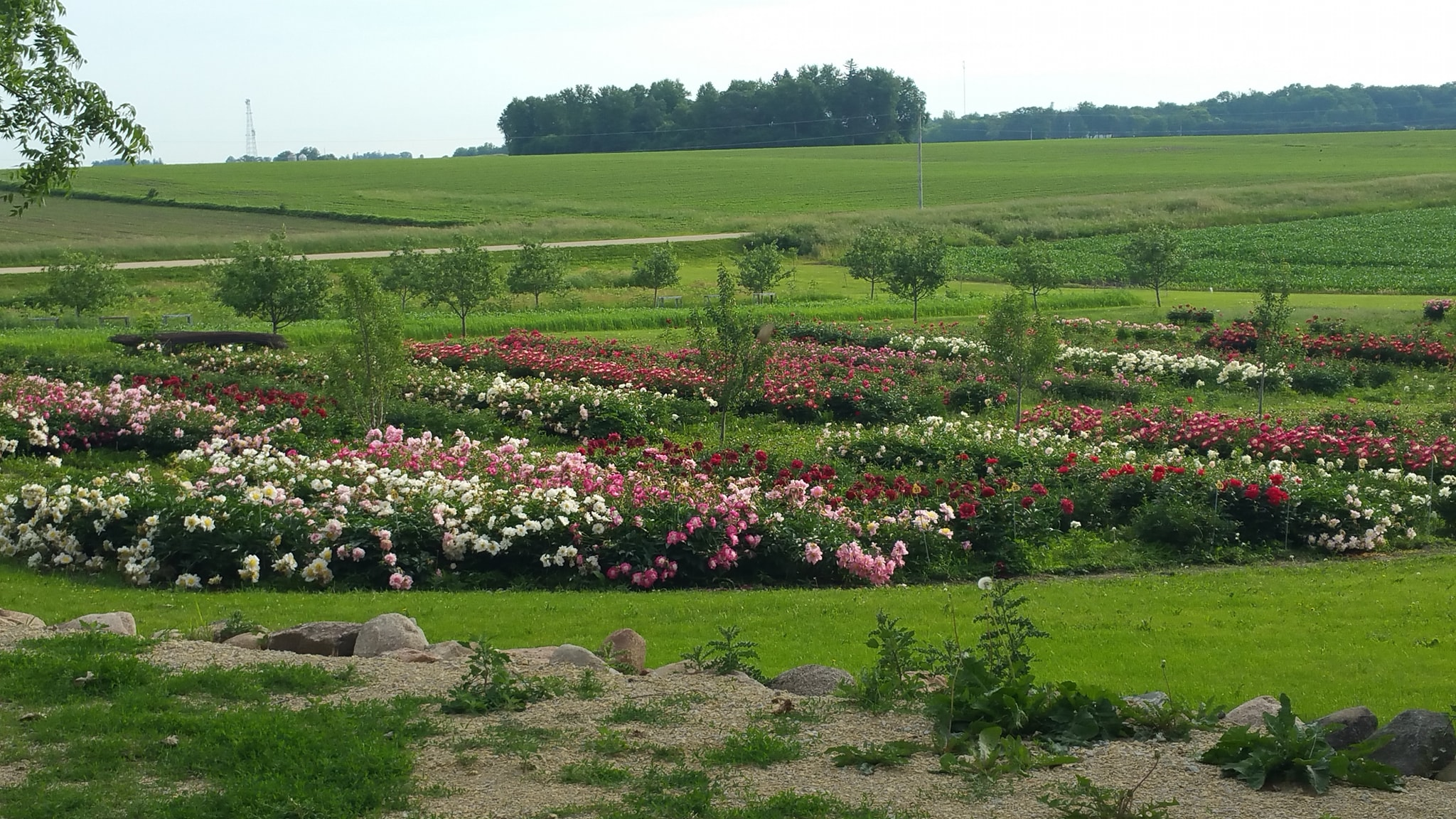 This Spring, Plan A Trip To Aspelund Gardens, A Dreamy Peony Farm In Minnesota