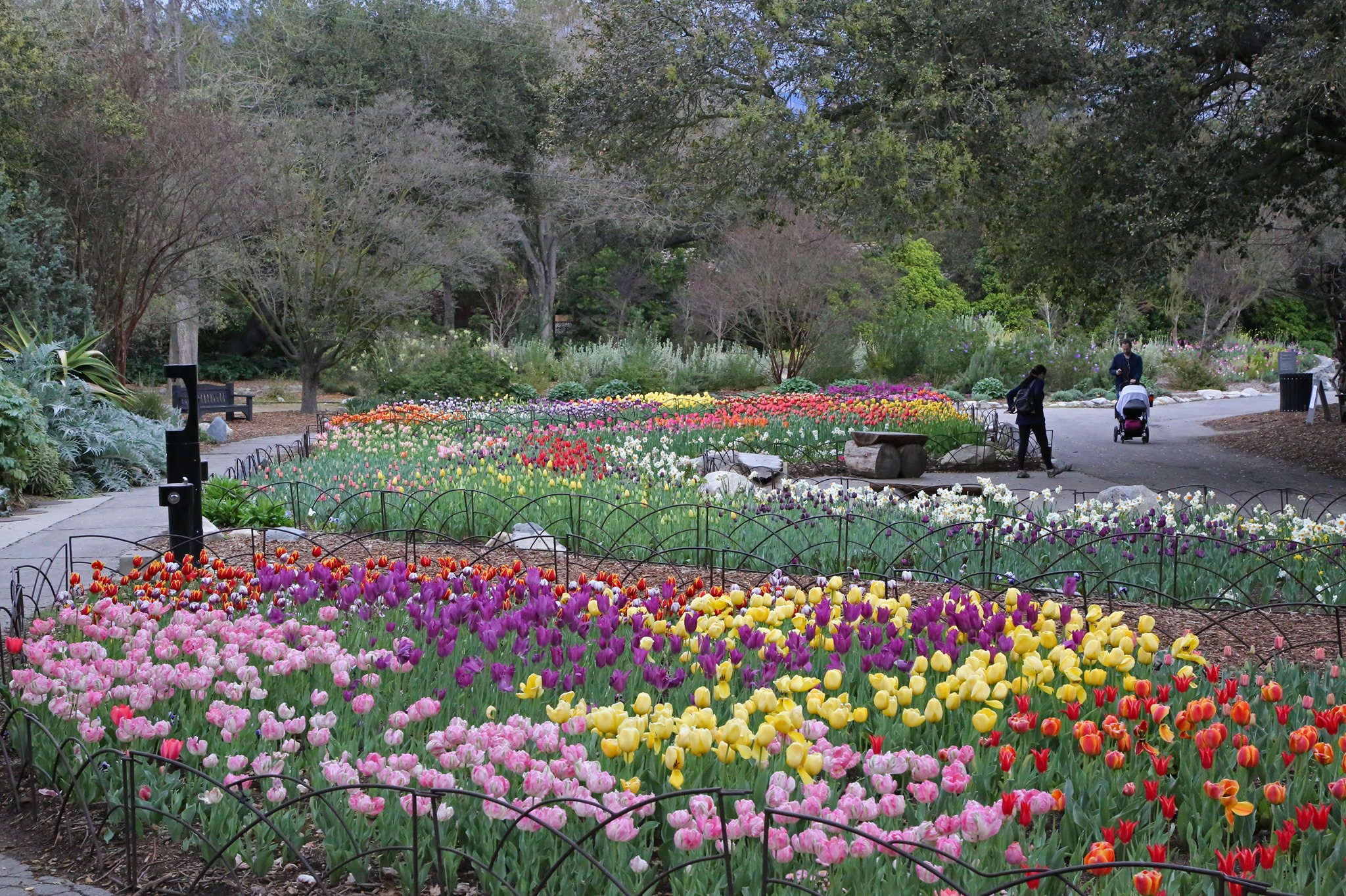 Take A Virtual Tour Through A Sea Of More Than 30,000 Tulips With Descanso Gardens In Southern California
