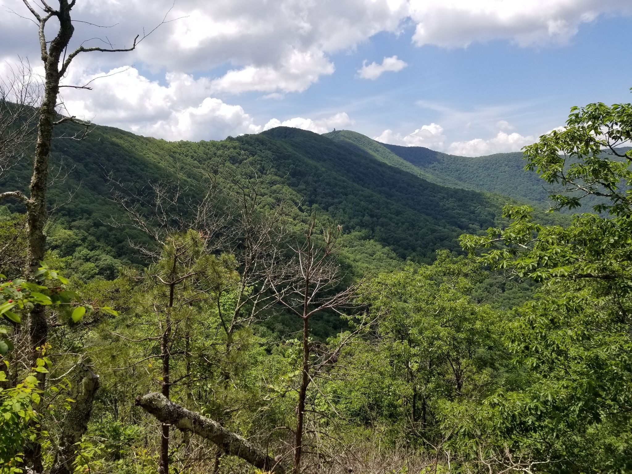 Hike The Historic Wagon Trail Surrounded By Lush Forest In Georgia's Brasstown Wilderness