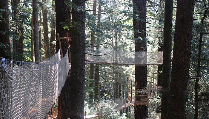 The Redwood Canopy Trail At Trees Of Mystery Is Northern California's Newest Aerial Adventure