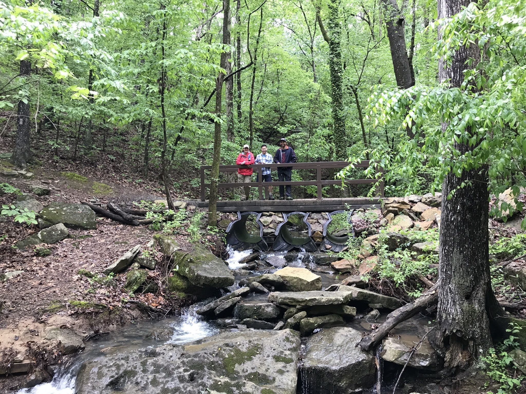 Hike Above The Little Red River For Some Big Views At Mossy Bluff Buckeye Trail In Arkansas