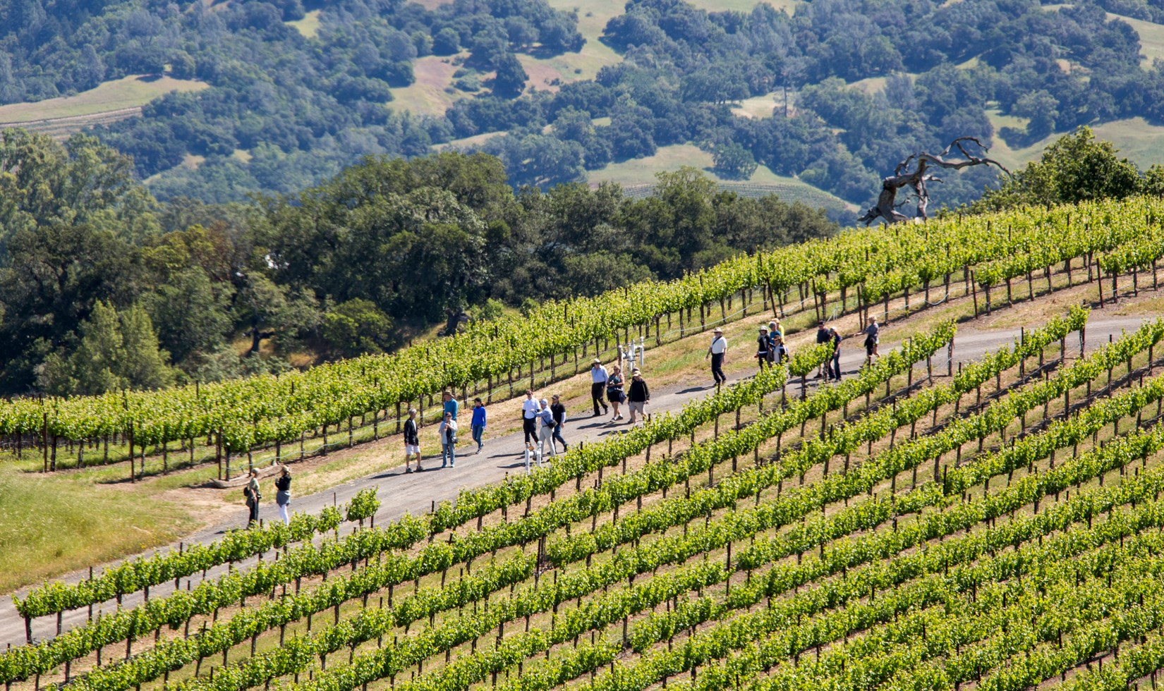 The Vineyard Hike At Jordan Winery In Northern California That Ends With A Picnic And Wine Tasting