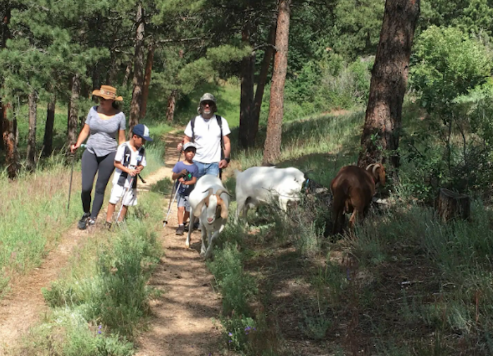 Go Hiking With Goats At The Arkansas Mountain Mining Trail In Colorado For A Unique Adventure
