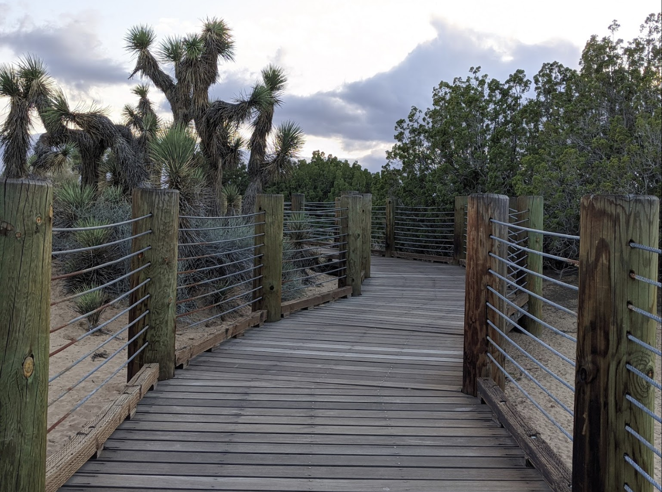 Prime Desert Woodland Preserve Is A Little-Known Southern California Destination With An Otherworldly Landscape