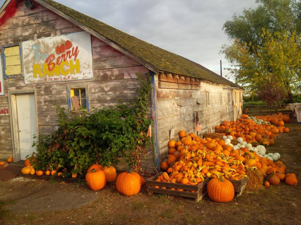 Plan A Fun-Filled Day At The Pick-Your-Own Pumpkin Patch At The Berry Ranch In Idaho