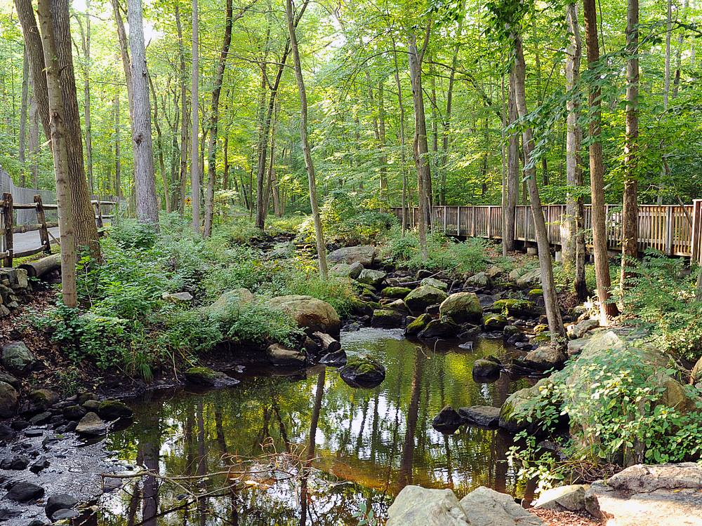An Accessible Boardwalk Trail In Connecticut, The Wheels In The Woods Trail Is Full Of Enchanting Views