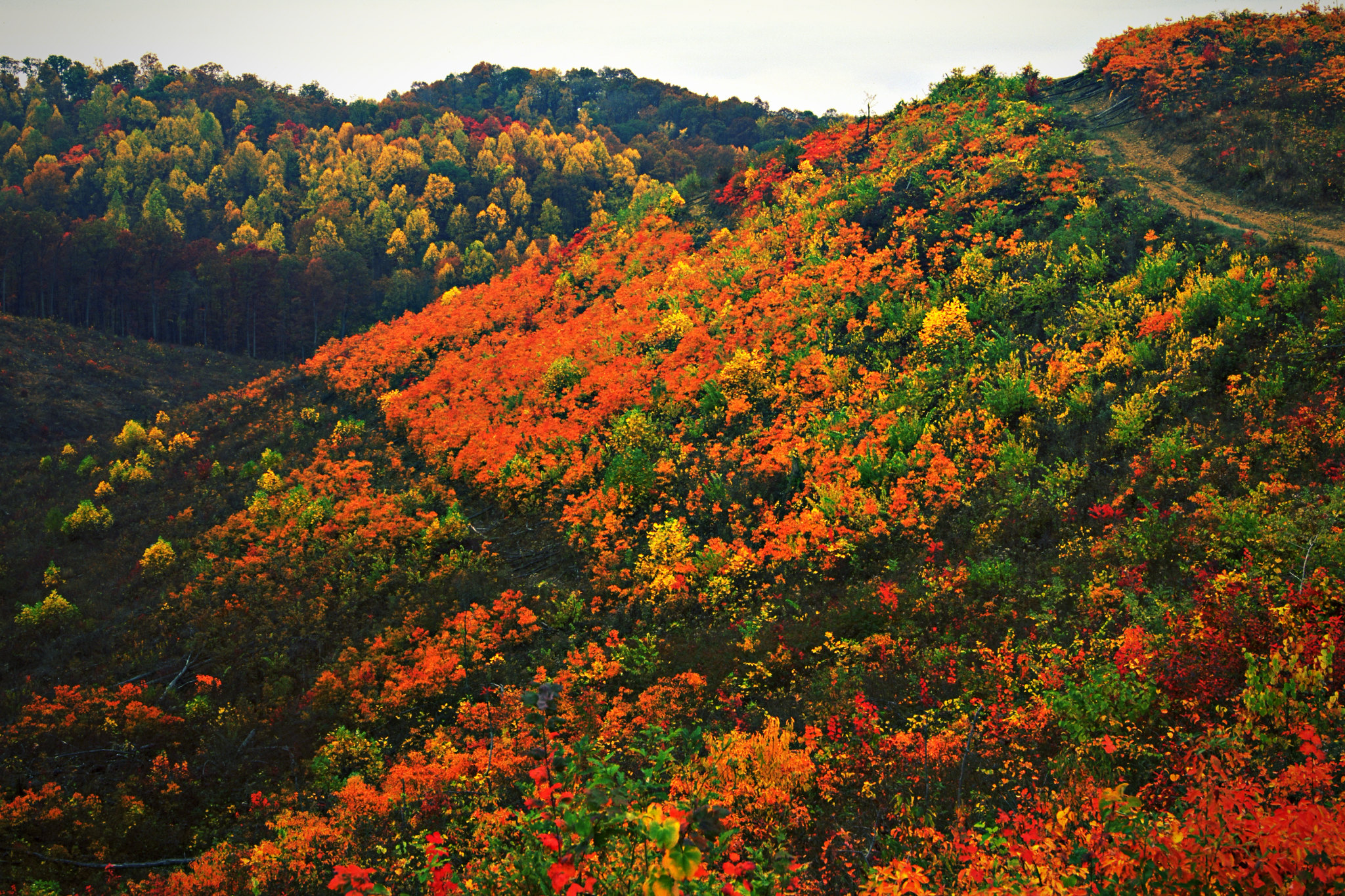 Find Out When The Leaves Will Change Color In Ohio With This Interactive Fall Foliage Map
