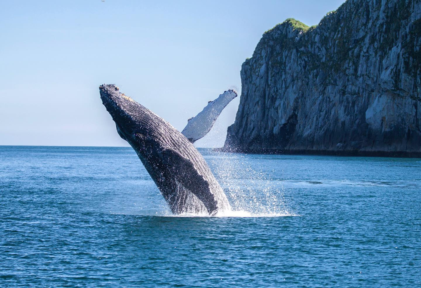 Spot The Humpback Whale On Its Annual Migration Through Alaska This Fall