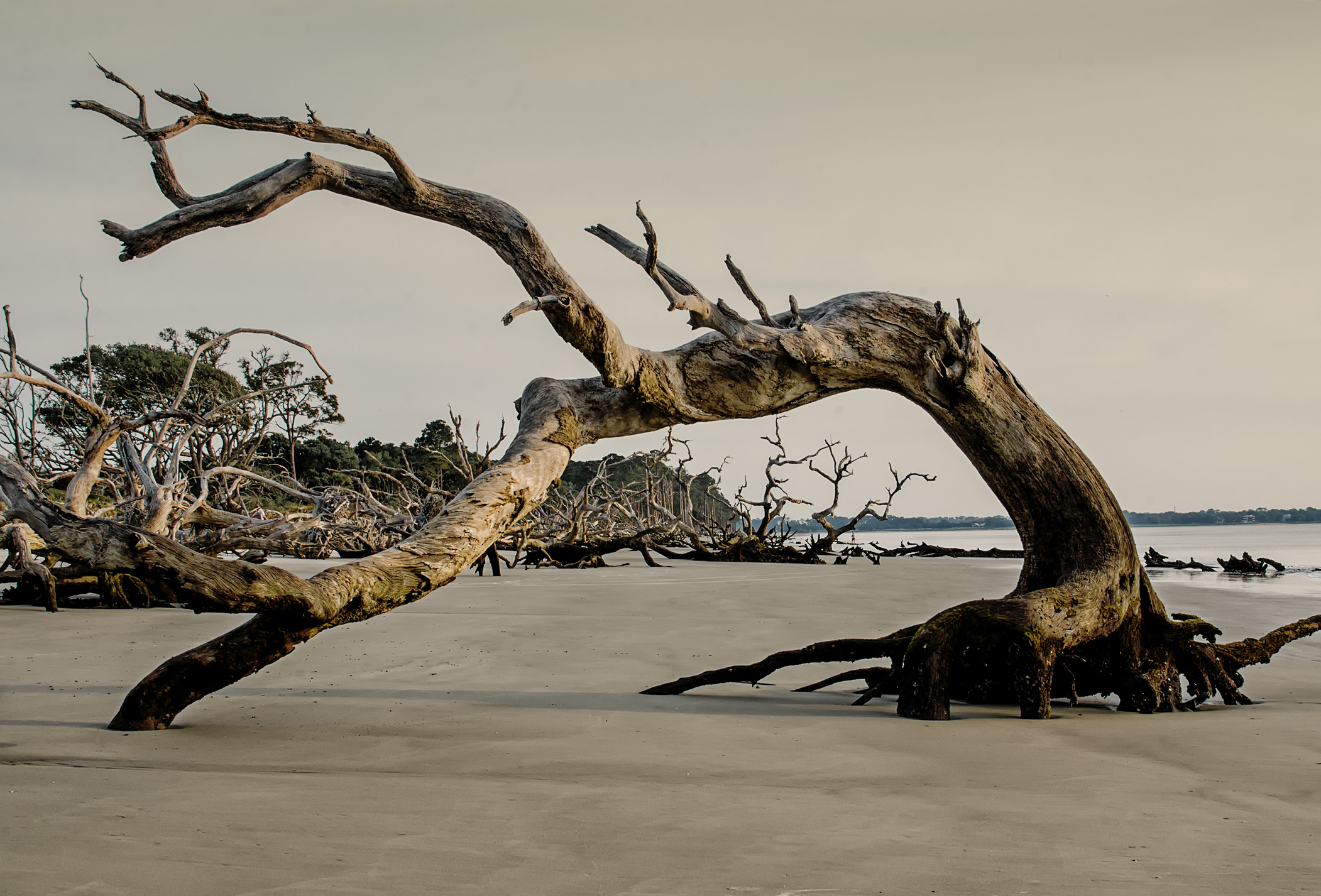 Driftwood Beach Is A Fascinating Spot in Georgia That's Straight Out Of A Fairy Tale