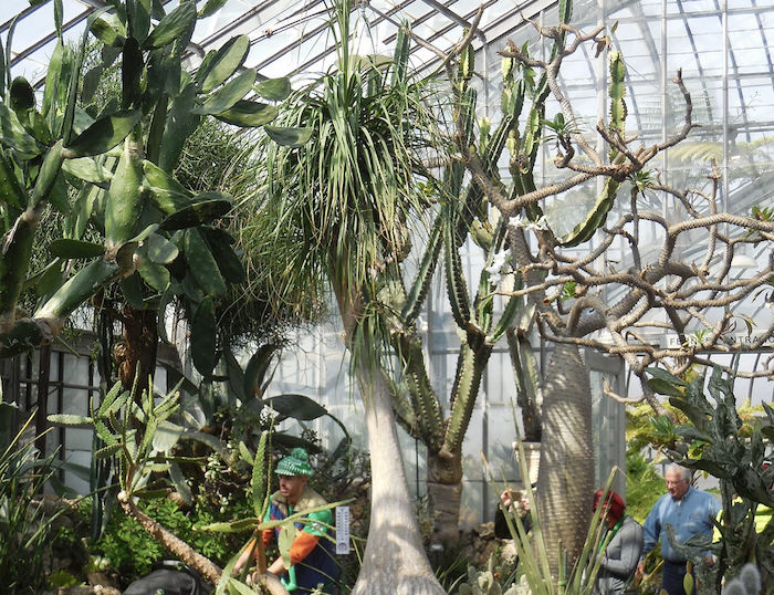 Belle Isle Conservatory Is A Fascinating Spot in Detroit That's Straight Out Of A Fairy Tale