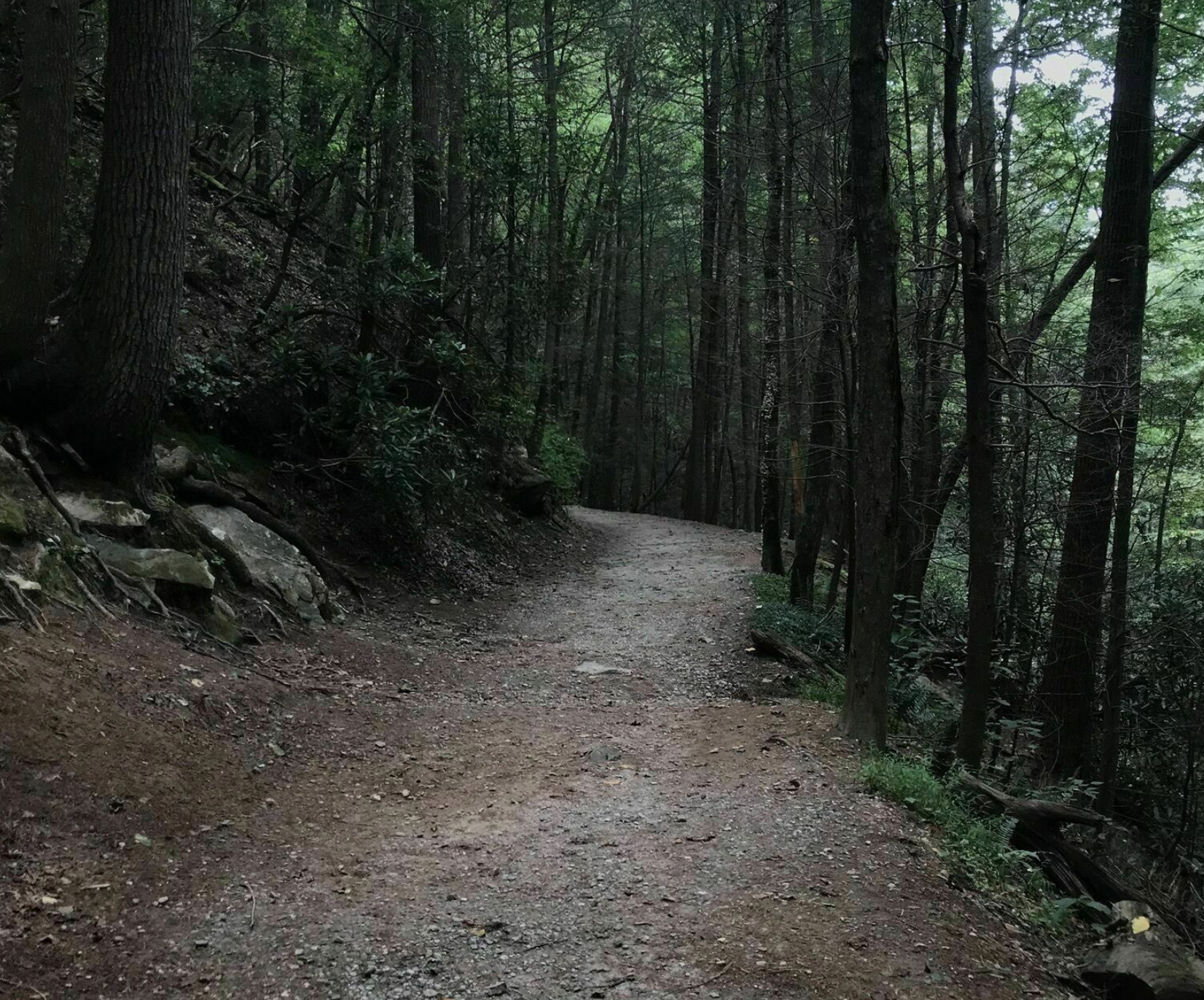 Dukes Creek Trail Might Be One Of The Most Beautiful Short-And-Sweet Hikes To Take In Georgia