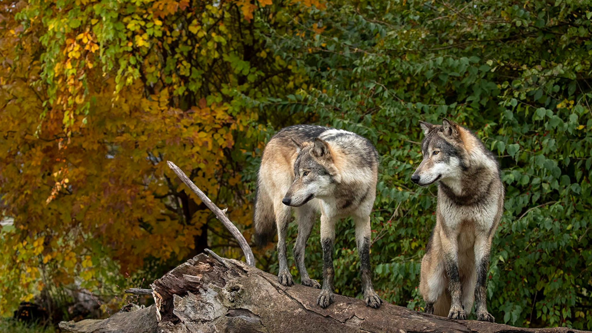 6 Wild Places To See Uncommon Animals In Indiana