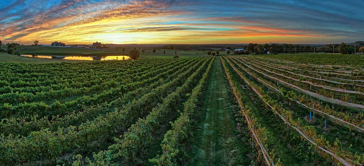 Drink Wine On A Scenic 140-Acre Countryside At Gouveia Vineyards In Connecticut