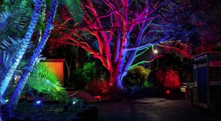 Glowing Garden At Socal S South Coast Botanical Garden For Christmas