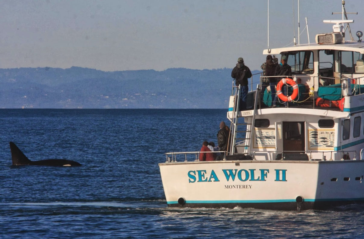 This All-Day Whale Watching Trip At Monterey Bay In Northern California Belongs On Your Bucket List